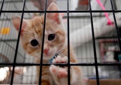 Mamavadisi - Barınak İçin 1 Kg Kedi Maması