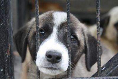 Mamavadisi - Barınak İçin 1 Kg Köpek Maması