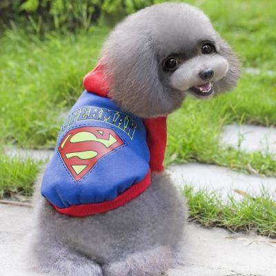 Lion - Lion Superman Köpek Elbisesi Small MQ-QZ105